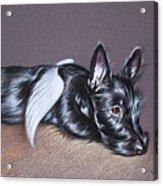 Tired Angel Acrylic Print by Elena Kolotusha