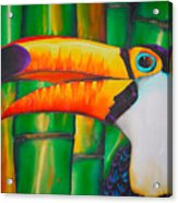 Toco Toucan Acrylic Print by Daniel Jean-Baptiste