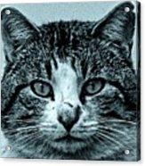 Tom Cat Acrylic Print by Tony Grider