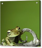 Tree Frog Acrylic Print by Dirk Ercken