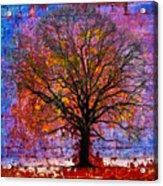 Tree Of Life Acrylic Print by David Clanton