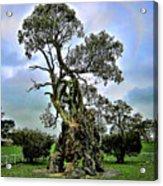 Treehouse Acrylic Print by Douglas Barnard
