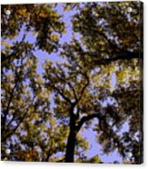 Trees Conversing Acrylic Print by Deborah  Crew-Johnson