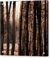 Trees Gathering Acrylic Print by Wim Lanclus