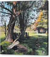 Trees Near Rhug. Acrylic Print by Harry Robertson