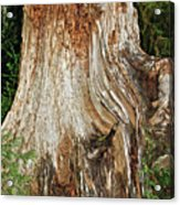 Trees On The Trails - Olympic National Park Wa Acrylic Print by Christine Till