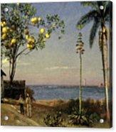 Tropical Scene Acrylic Print by Albert Bierstadt