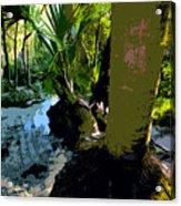 Tropical Spring Acrylic Print by David Lee Thompson