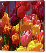 Tulip Confusion Acrylic Print by Sharon Talson