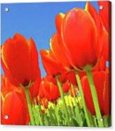 Tulip Field Acrylic Print by Giancarlo Liguori