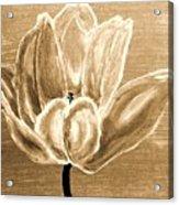 Tulip In Brown Tones Acrylic Print by Marsha Heiken