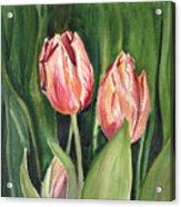 Tulips  Acrylic Print by Irina Sztukowski
