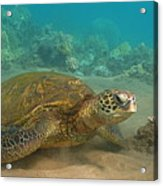 Turtle Magic Acrylic Print by Brian Governale