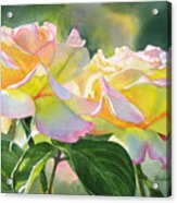 Two Peace Rose Blossoms Acrylic Print by Sharon Freeman