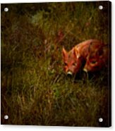Two Piglets Acrylic Print by Angel  Tarantella