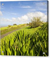 Ulupalakua Country Road Acrylic Print by Ron Dahlquist - Printscapes