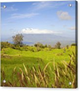Ulupalakua Landscape Acrylic Print by Ron Dahlquist - Printscapes