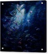 Under The Sea Acrylic Print by Rachel Christine Nowicki