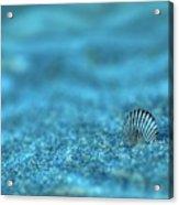 Underwater Seashell - Jersey Shore Acrylic Print by Angie Tirado