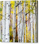 Uphill Acrylic Print by The Forests Edge Photography - Diane Sandoval