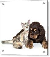 Very Sweet Kitten Lying On Puppy Acrylic Print by StockImage