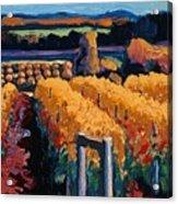 Vineyard Light Acrylic Print by Christopher Mize
