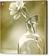 Vintage Geranium Acrylic Print by Amy Neal