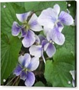 Violets 2 Acrylic Print by Anna Villarreal Garbis