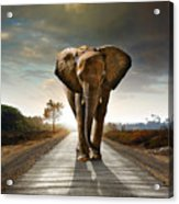 Walking Elephant Acrylic Print by Carlos Caetano