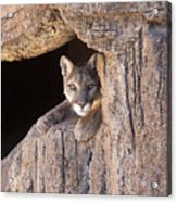 Watchful Eyes Acrylic Print by Sandra Bronstein