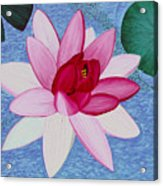 Water Lilly Acrylic Print by Loraine LeBlanc