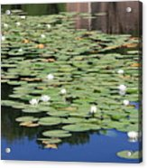 Water Lily Pond Acrylic Print by Carol Groenen
