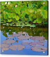 Water Lily Sky Acrylic Print by Nada Frazier