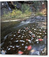West Fork Oak Creek And Fall Color Acrylic Print by Rich Reid