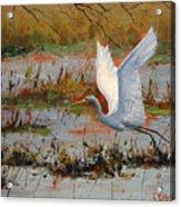 Wetland Heron Acrylic Print by Graham Gercken