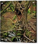 Where The Ents Are Acrylic Print by Angel  Tarantella