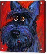 whimsical Schnauzer dog painting Acrylic Print by Svetlana Novikova