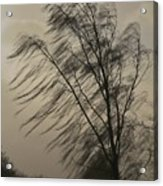 Whipped Acrylic Print by Odd Jeppesen