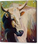 White Bull Portrait Acrylic Print by Marion Rose