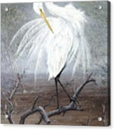 White Egret Acrylic Print by Kevin Brant