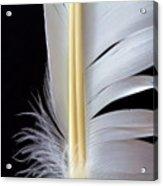 White Feather Acrylic Print by Bob Orsillo