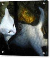 White Kitten Acrylic Print by David Lee Thompson