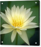 White Lily Acrylic Print by Ron Dahlquist - Printscapes