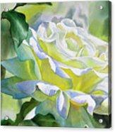 White Rose With Yellow Glow Acrylic Print by Sharon Freeman