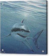White Shark Acrylic Print by Angel Ortiz
