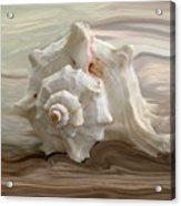 White Shell Acrylic Print by Linda Sannuti