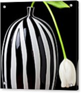 White Tulip In Striped Vase Acrylic Print by Garry Gay