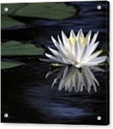 White Water Lily Acrylic Print by Sabrina L Ryan