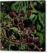 Wild Berries Acrylic Print by David Lane