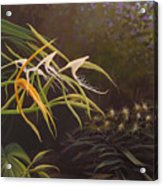 Wild Orchids Acrylic Print by Hunter Jay